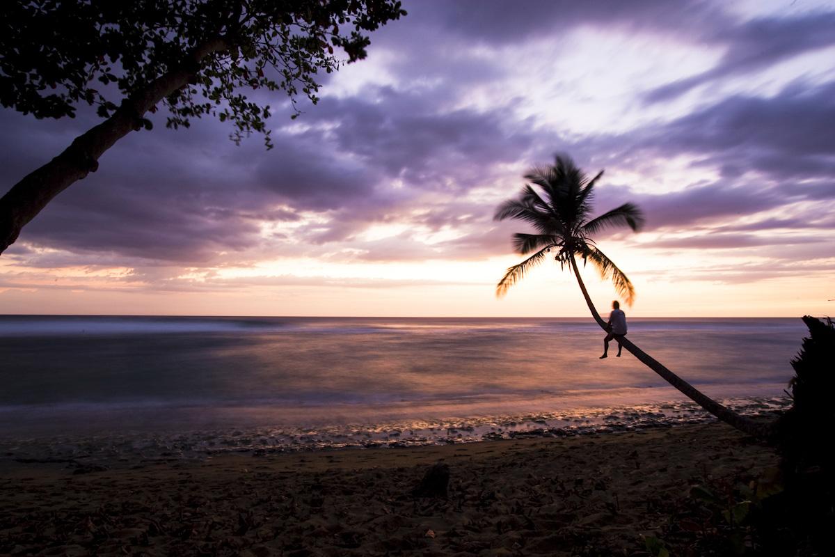 palmier-violet
