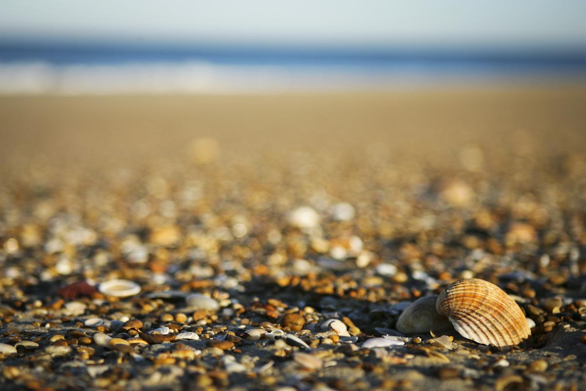 shell-sand