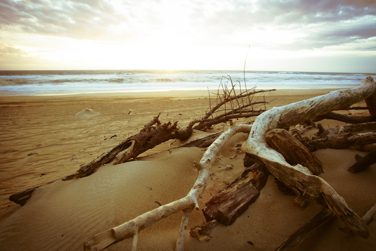 wood-beach